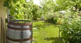 Volle Regentonne im Garten, Regentonne kaufen