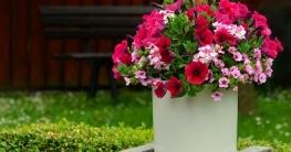 Blume im Garten - heizstrahler Beitrag